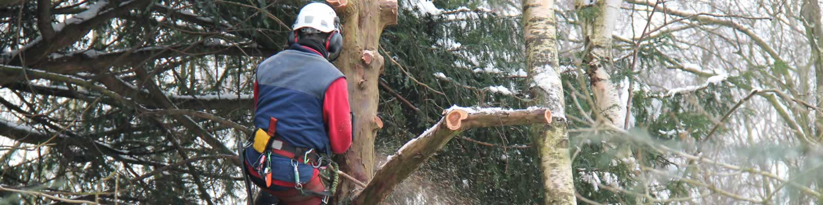 Arborists based in Southport