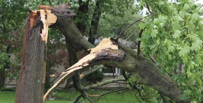 Emergency Tree Services In Formby