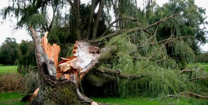 Emergency tree surgeon in Blackpool