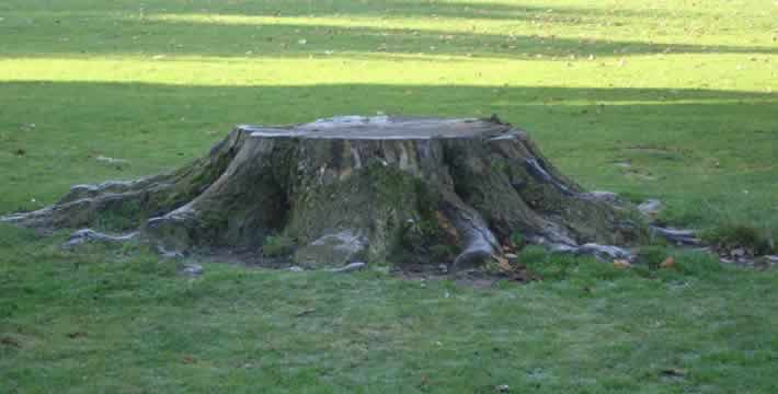 Skelmersdale tree stump removal services