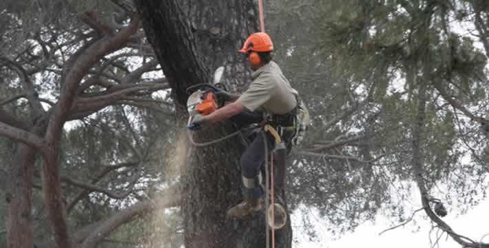 Tree felling services around Preston